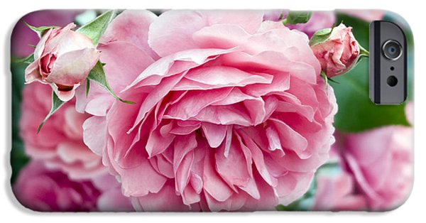 Garden Images iPhone Cases - Pink Roses iPhone Case by Frank Tschakert