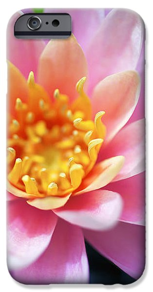 Pink Water Lily iPhone Case by Kicka Witte