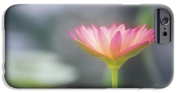 Nature Center Pond iPhone Cases - Pink Water Lily iPhone Case by Ron Dahlquist - Printscapes