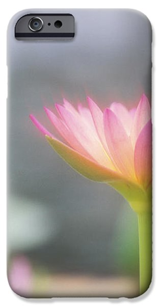 Pink Water Lily iPhone Case by Ron Dahlquist - Printscapes