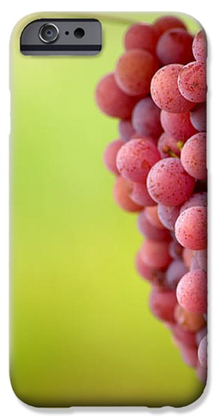 Pinot Noir Grapes iPhone Case by Jeremy Walker