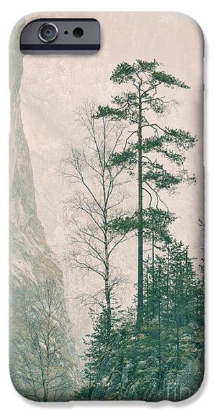 Wintertime iPhone Cases - Pinus sylvestris iPhone Case by Gabriela Insuratelu