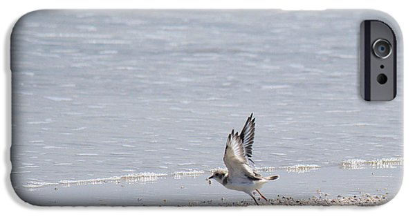 Sea Birds iPhone Cases - Piping Plover in Flight iPhone Case by Roena King