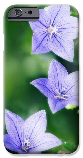 Balloon Flower iPhone Cases - Platycodon Grandiflorus iPhone Case by Maria Mosolova