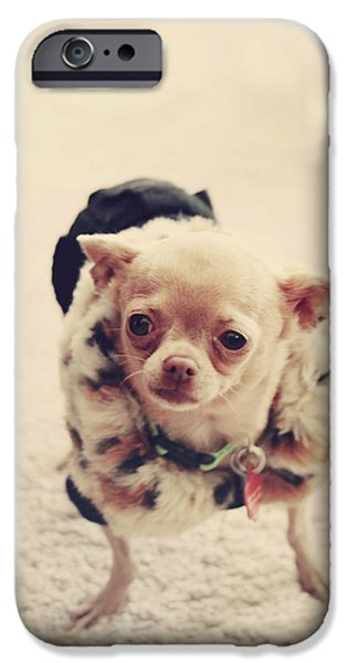 Tiny Dogs iPhone Cases - Please Meet Zoe iPhone Case by Laurie Search