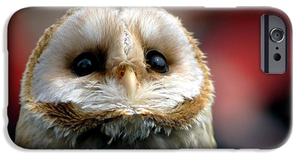 Baby Bird iPhone Cases - Please  iPhone Case by Photodream Art