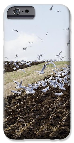 Ploughing With Seagulls, Co Down iPhone Case by The Irish Image Collection
