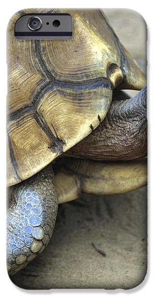 Ploughshare Tortoise iPhone Case by Chris Hellier