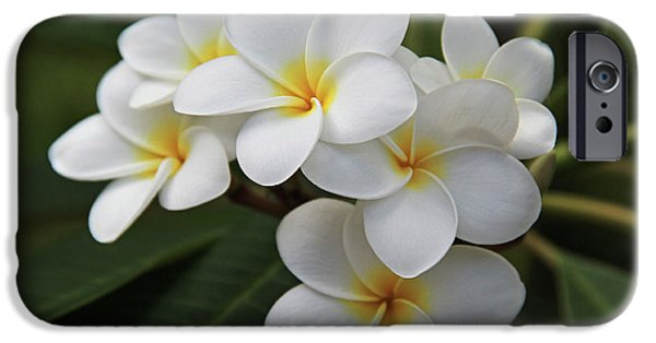Florals Photographs iPhone Cases - Plumeria - Golden Hearts iPhone Case by Kerri Ligatich