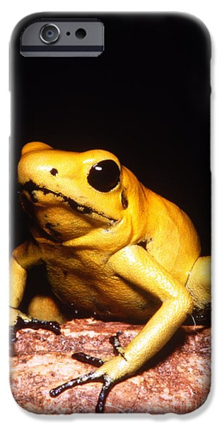 Frogs Photographs iPhone Cases - Poison Dart Frog iPhone Case by Dante Fenolio