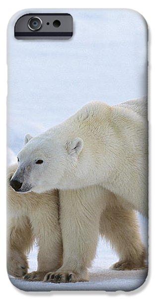 Polar Bear Ursus Maritimus And Cub iPhone Case by Suzi Eszterhas