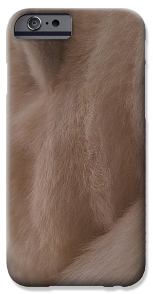 Polar Dream iPhone Case by Linda Knorr Shafer