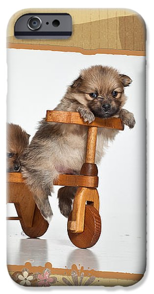 Pomeranian 1 iPhone Case by Everet Regal