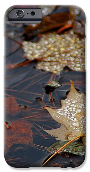 Pond Leaf Dew Drops iPhone Case by LeeAnn McLaneGoetz McLaneGoetzStudioLLCcom