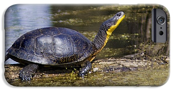 Nature Center Pond iPhone Cases - Pond Turtle basking in the sun iPhone Case by LeeAnn McLaneGoetz McLaneGoetzStudioLLCcom