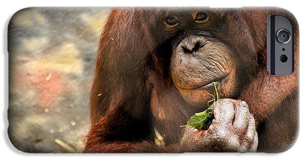 Orangutan iPhone Cases - Pondering iPhone Case by Mark Papke