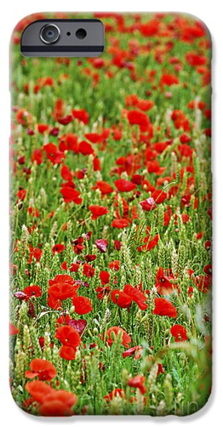 Crops iPhone Cases - Poppies in rye iPhone Case by Elena Elisseeva