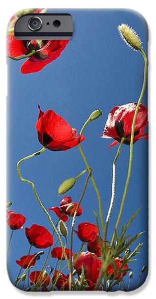 Poppy Field iPhone Case by Ayhan Altun