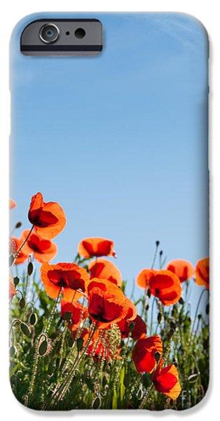 Flora iPhone Cases - Poppy Flowers 01 iPhone Case by Nailia Schwarz