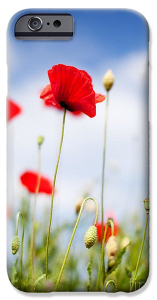 Meadow iPhone Cases - Poppy Flowers 06 iPhone Case by Nailia Schwarz