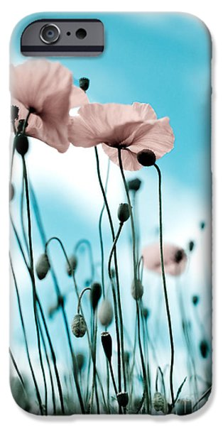 Petals iPhone Cases - Poppy Flowers 09 iPhone Case by Nailia Schwarz