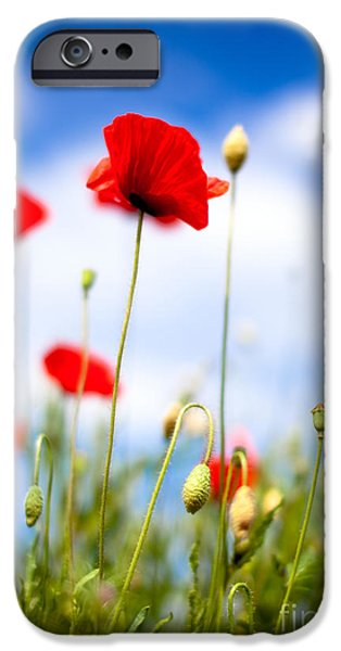 Meadow iPhone Cases - Poppy Flowers 12 iPhone Case by Nailia Schwarz