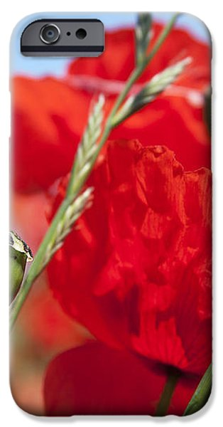Poppy pods iPhone Case by Jane Rix