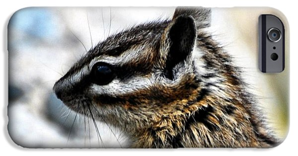 Chip iPhone Cases - Portrait of a Chipmunk iPhone Case by Don Mann