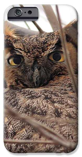Portrait of a Great Horned Owl iPhone Case by Wingsdomain Art and Photography