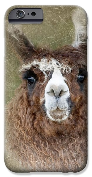 Llama Digital iPhone Cases - Portrait of a Llama iPhone Case by Betty LaRue