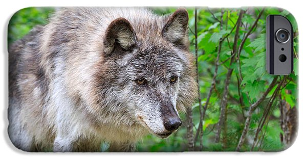 Wolf Photographs iPhone Cases - Portrait of a Wolf iPhone Case by Louise Heusinkveld