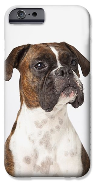 Portrait Of Boxer Dog On White iPhone Case by LJM Photo
