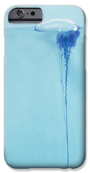 Tendrils iPhone Cases - Portugese Man o War iPhone Case by Dave Fleetham - Printscapes