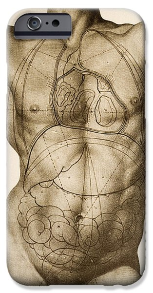 Intestines iPhone Cases - Positions Of The Internal Organs iPhone Case by Mehau Kulyk