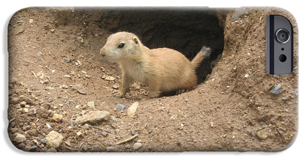 Prairie Dogs iPhone Cases - Prairie Dog iPhone Case by Bill Cannon