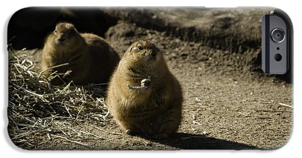 Prairie Dogs iPhone Cases - Prairie Dog Sees The Shadow iPhone Case by Trish Tritz