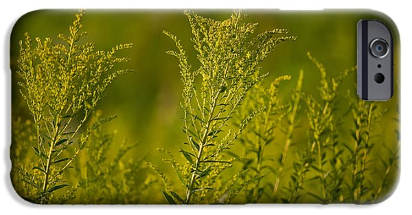 Prairie iPhone Cases - Prairie Goldenrod iPhone Case by Steve Gadomski
