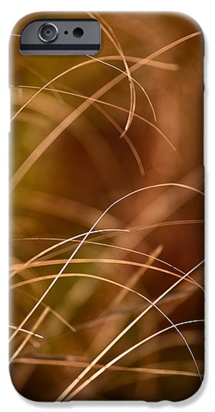 Prairie iPhone Cases - Prairie Grasses Number 4 iPhone Case by Steve Gadomski