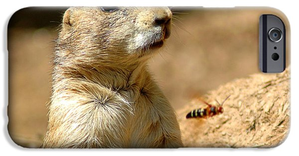 Smithsonian iPhone Cases - Prarie Dog Bee Alert iPhone Case by LeeAnn McLaneGoetz McLaneGoetzStudioLLCcom