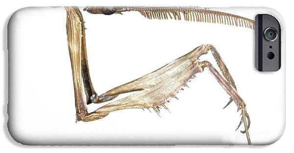Mantodea iPhone Cases - Praying Mantis Head And Forelegs iPhone Case by Lawrence Lawry