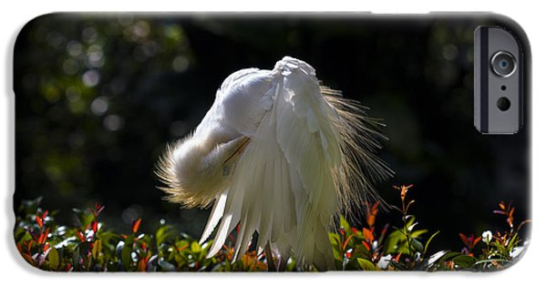 Cattle Egret iPhone Cases - Preening Time iPhone Case by Zoe Ferrie