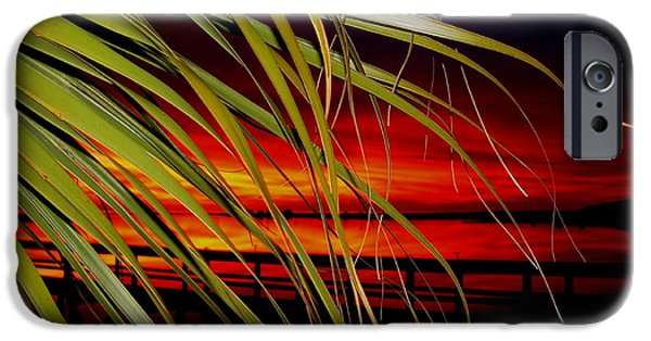 Palm Tree Greeting Cards iPhone Cases - Prelude To A Sunset Kiss iPhone Case by Debbie May