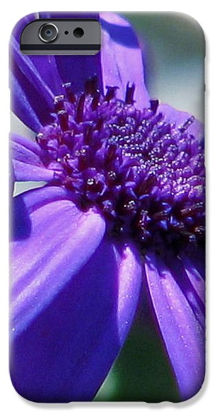 Pretty in Pericallis iPhone Case by Rory Sagner