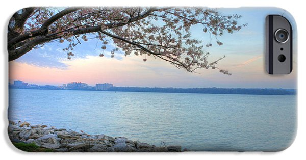 Cherry Blossoms iPhone Cases - Pretty Potomac iPhone Case by JC Findley