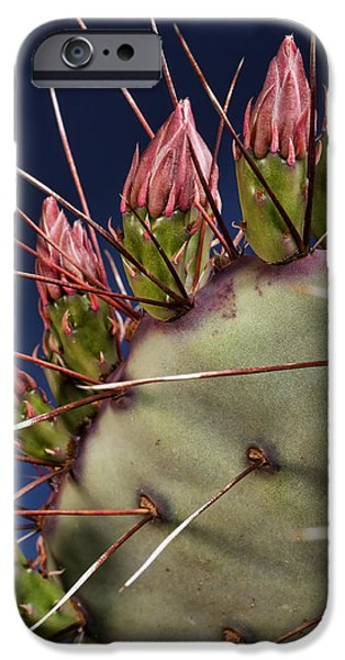 Prickly Buds iPhone Case by Kelley King