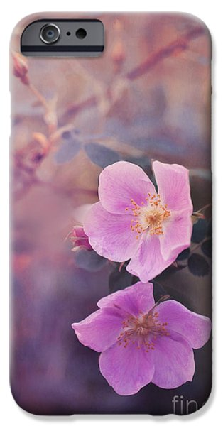 Floral Photographs iPhone Cases - Prickly Rose iPhone Case by Priska Wettstein