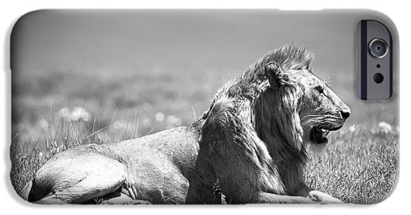 Wild Animals iPhone Cases - Pride in Black and White iPhone Case by Sebastian Musial