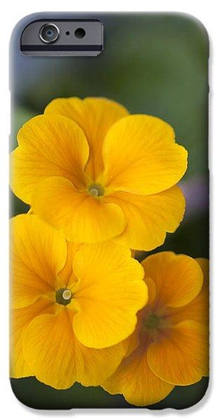 Primrose (primula Polyanthus) iPhone Case by Maria Mosolova