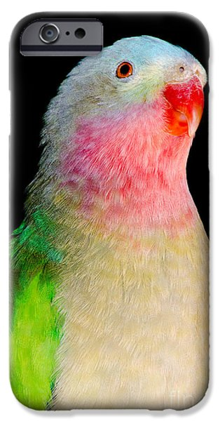 PRINCESS PARROT Polytelis alexandrae Western Australia iPhone Case by Andy Smy