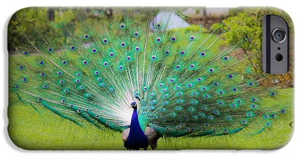 Langlois iPhone Cases - Proud Peacock iPhone Case by Darren Langlois